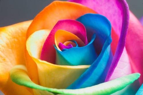 تاثیر رنگ ها بر روی زندگی,تاثیر رنگ ها بر زندگی انسان,تاثیر رنگ ها در زندگی