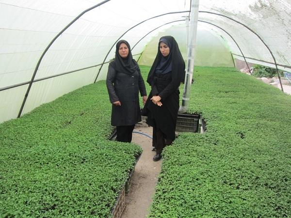 کارآفرینان ایرانی,کارآفرینی ایرانی