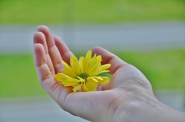 تمرین روز بیست و چهارم شکرگزاری,روز بیست و چهارم شکرگزاری,روز بیست و چهارم معجزه شکرگزاری