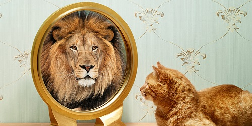 خودباوری و اعتماد به نفس,دستیابی به اهداف,رسیدن به خودباوری